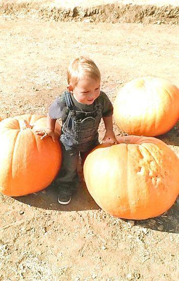 Halloween EyeEm Pumpkinpicking PumpkinPatch🎃 Halloween2015 Pumpkin Patch Happy Halloween Pumpkin Pumpkins Pumpkin!Pumpkin! Funtimes