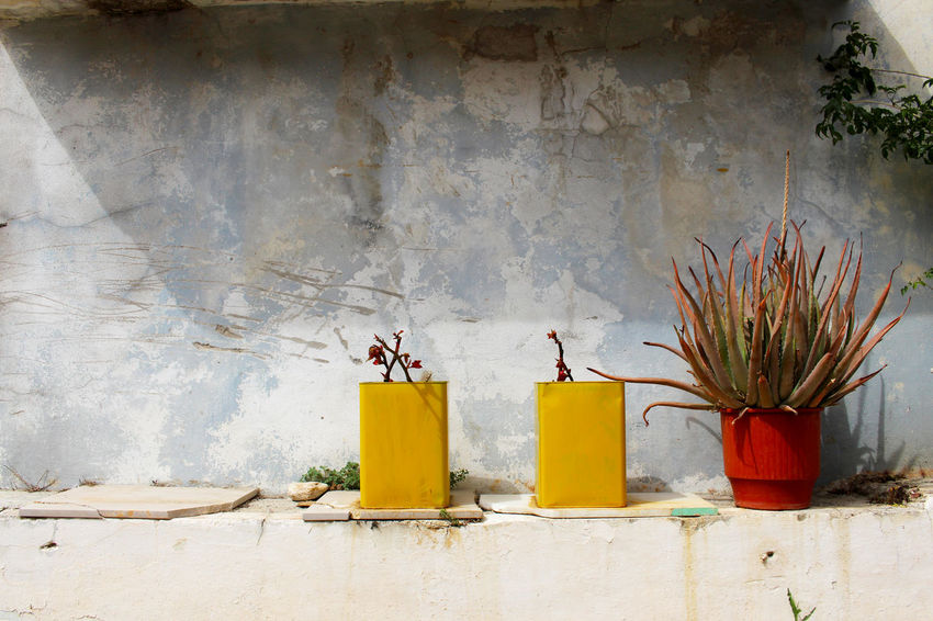 Built Structure Day Deterioration Greece Green Grey Background Growth Lesbos Lesvos Mediterranean  No People Plant Potted Plant Side By Side Village Village Life Wall Yellow