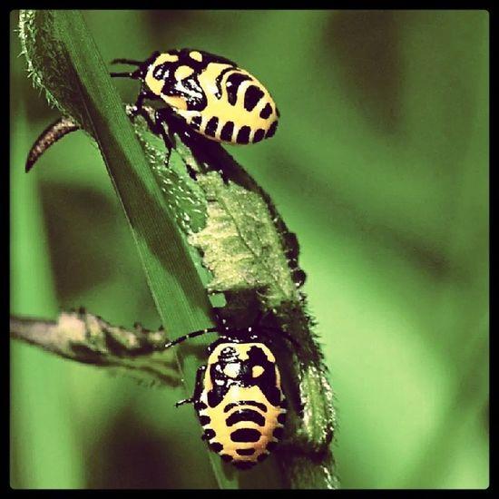 Berdua lebih baik Berdua Couple Ladybird Grass green rumput hijau nature bestnatureshot instagram fotomania overexpose baik pasangan awak hebat merayap lepaking