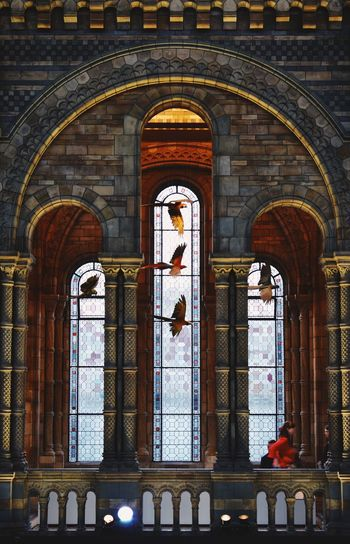 Bird Stained Glass Window Museum Arch Architecture Window Day Built Structure Indoors  Real People Building History Leisure Activity Incidental People Travel Destinations The Past Ornate