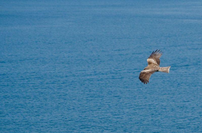 Bird flying above water
