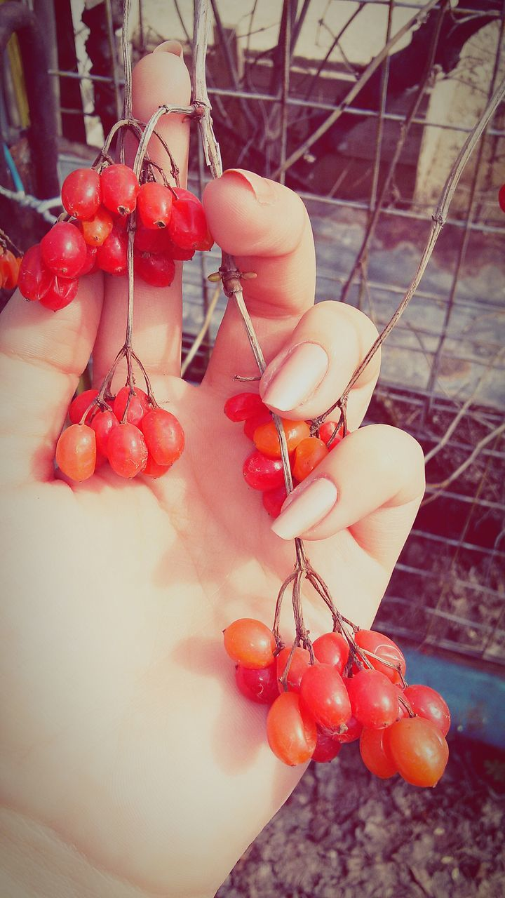 human hand, food and drink, fruit, red, one person, human body part, food, healthy eating, cherry, real people, day, holding, outdoors, freshness, close-up, women, low section, nature, people