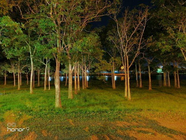 Teste Honor 9 Modo Noturno 2 Tree Water Grass Sky