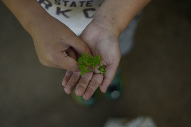 High angle view of child holding clover plant