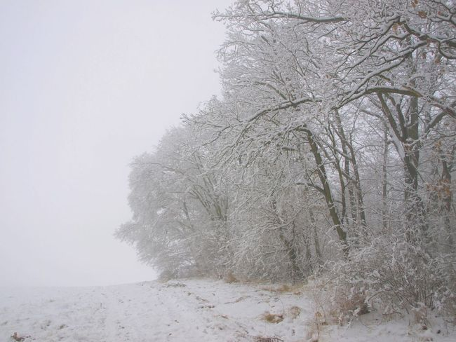 White in white Landscape White EyeEmNewHere Bare Tree Beauty In Nature Cold Temperature Frozen Nature Snow Tree Winter No People