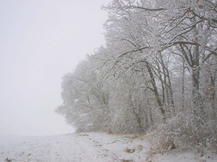 Low angle view of snow covered trees against clear sky