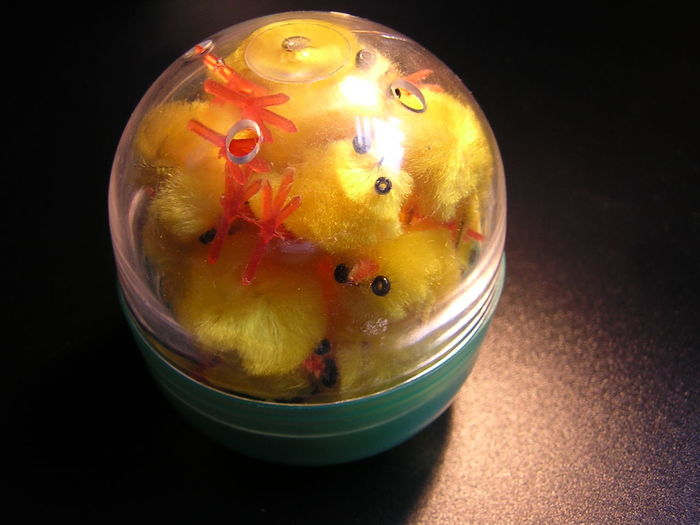 Black Background Capsule Chicken Feet Chicken Toys Chicks Close-up Fluffy Inside Light Orange Color Silly Squished Studio Shot
