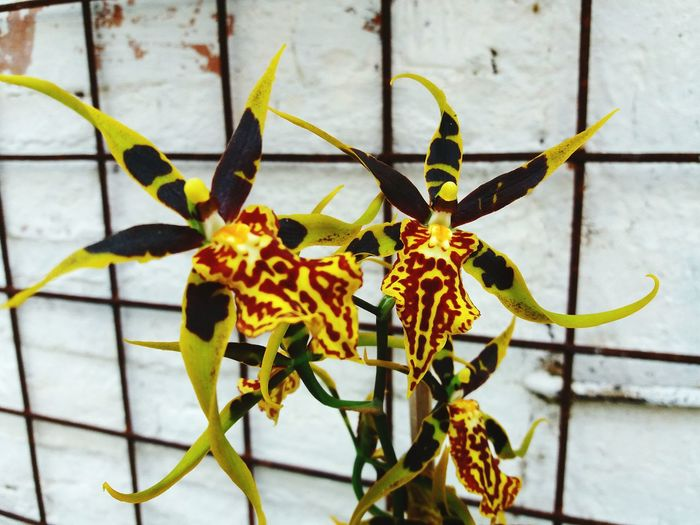 Outdoors Plant No People Beauty In Nature Orchidflower Blooming Orchidaceae Orchids In Bloom Orchid Collection Orchid Obsession Orchid Love Orchid Blossoms OrchidLover Orchids In My Backyard Freshness Plant Nature Visual Feast Fragility Flower Petal Flower Head Close-up Nature