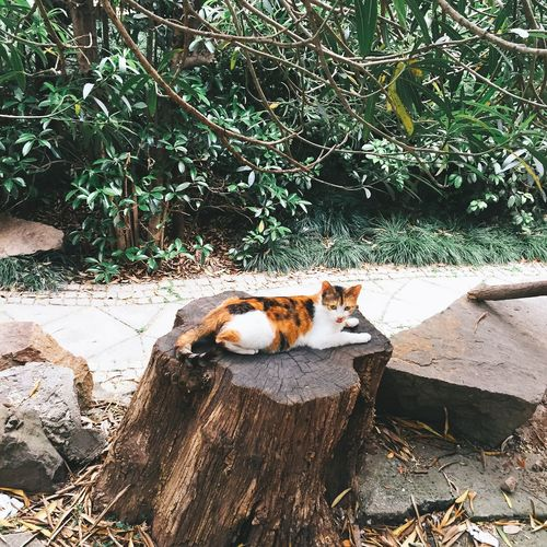 High angle view of cat sitting on tree stumps