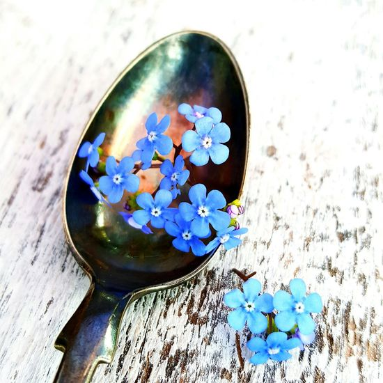 Forget me not flowers on antique silver spoon Flower High Angle View Nature No People Close-up Flower Head Fragility Freshness Beauty In Nature Indoors  Day Garden Photography Still Life Photography Close Up Photography Vintage White Timber Forget Me Nots Freshness Outdoors Beauty In Nature Nature Spoon Blue Vintage Style, Old,