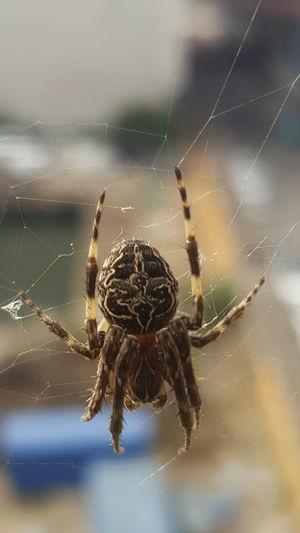 Spider Ouside My Window