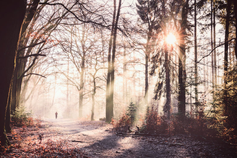 Sunny day Beauty In Nature Day Fog Forest Landscape Lens Flare Nature Outdoors Scenics Sky Sun Sunbeam Sunlight Sunset Tranquility Tree Tree Trunk