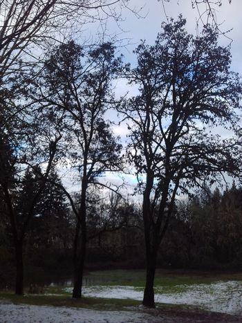 Tree No People Sky Outdoors Beauty In Nature Scenics Winter Cloud - Sky Rural Scene Winter Time