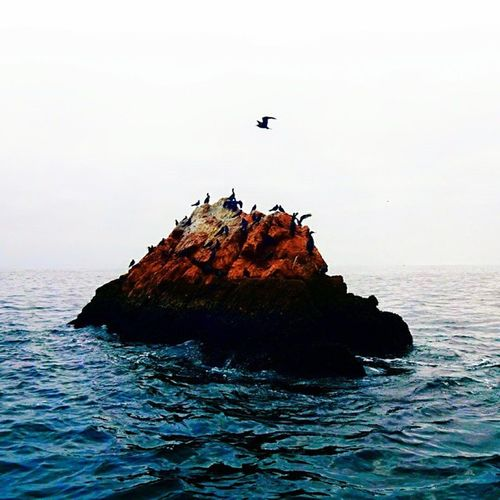 This, 1 hour out to sea from Paracas in a speedboat. Islas Bellastas (Bellastas Islands) Peru . IslasBellastas BellastasIslands
