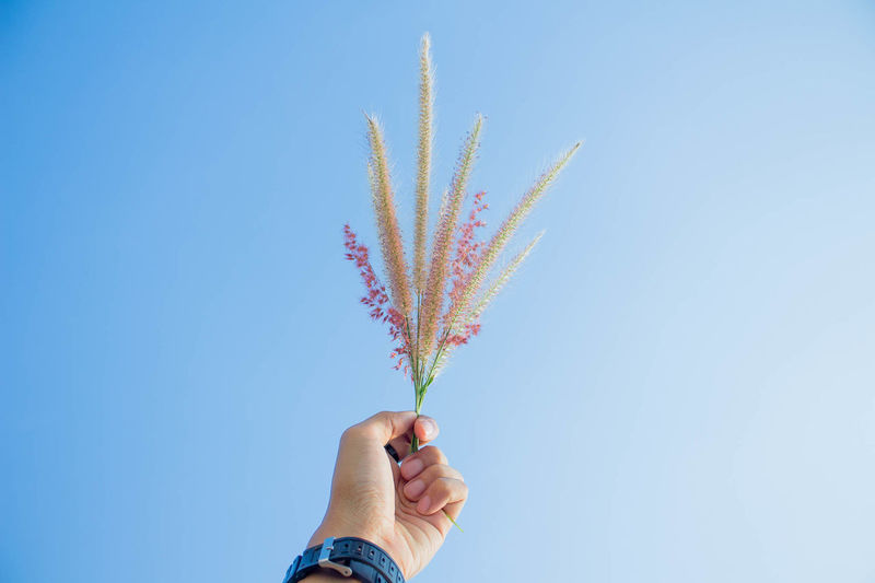 Cropped hand of person holding plant against clear blue sky