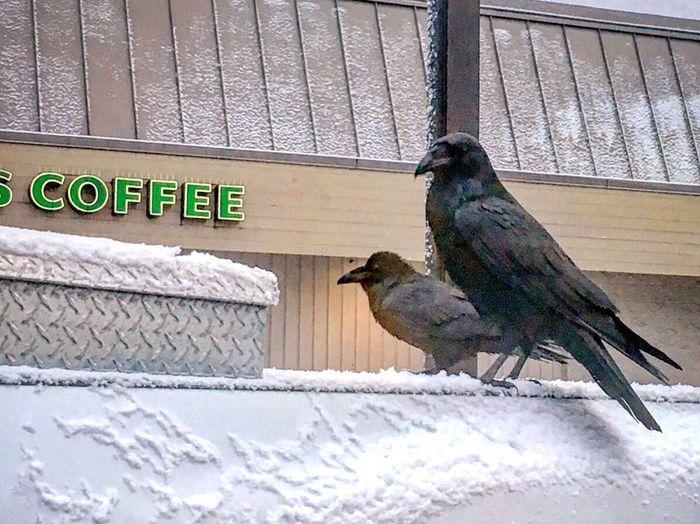 Bird Animal Themes Animal Animal Wildlife Winter Snow Outdoors