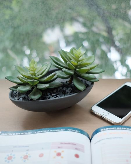 Reading time Table Indoors  No People Plate Close-up Freshness Food Day Nature House Green