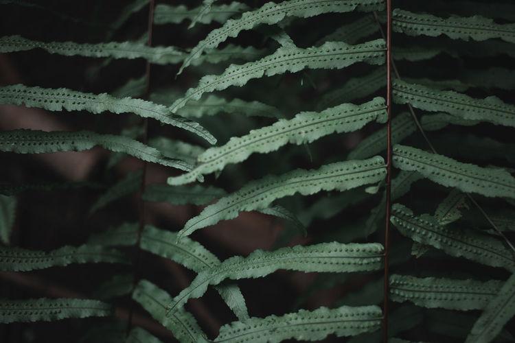 Full frame shot of frozen leaf