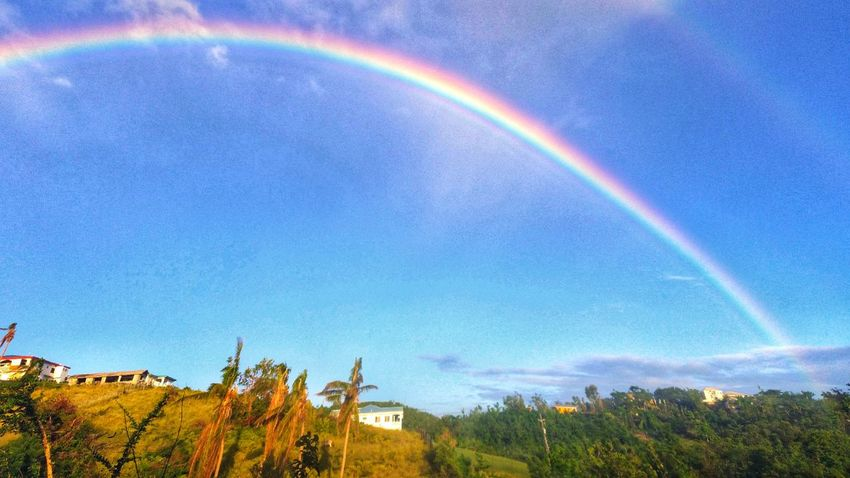 St. Croix USVI Double Rainbow Outdoors Tree Day Beauty In Nature