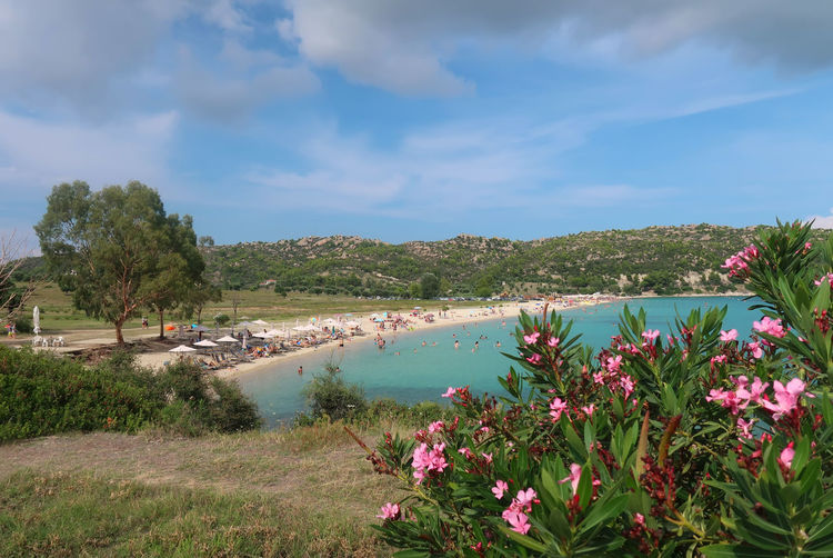 Agios Ioannis beach, Sithonia - Greece Agios Ioannis Beach GREECE ♥♥ Greece Photos Holiday Tourist Travel Beach Blue Chalkidiki Flower Flowering Plant Greece Landscape Nature Nikiti Oleander Plant Scenics - Nature Sithonia Sky Summer Tranquil Scene Tranquility Vacation Water