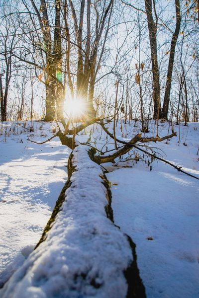 Winter Snow Cold Temperature Lens Flare Sun Nature Sunlight Scenics Tranquil Scene Tranquility Beauty In Nature Tree Landscape Outdoors Bare Tree No People Sky Sunset Water Day Shades Of Winter
