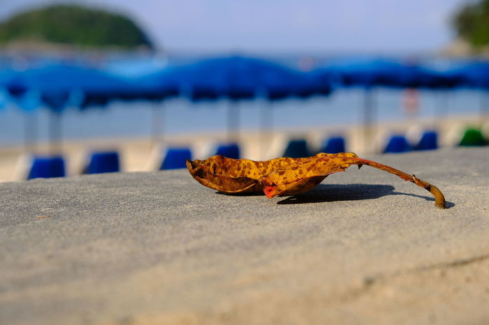 Dry Leave Brown Fall Ground Floor Road Conduct Umbrellas Summer Holiday Abstract Object Blue Colorful Island Sun Tourism Travel Outdoor Chair Spring Tourist Beach Sand Day Sea Outdoors Focus On Foreground Nature Close-up Water Sky