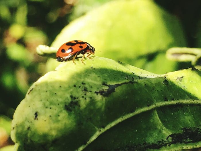 Bugs Life Environment Green Color Outdoors Beauty In Nature No People Nature Plant First Eyeem Photo