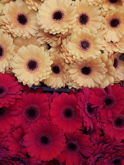 Flower Pattern Flower Head Freshness Backgrounds Beauty In Nature Yellow Flowerporn Cover Flower Photography Flower Power Plants And Flowers Flower Collection Nature Beauty In Nature Red Flowers Red Yellow Red Yellow Flowers Flowers Background