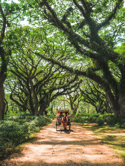 People in horse cart on land in forest