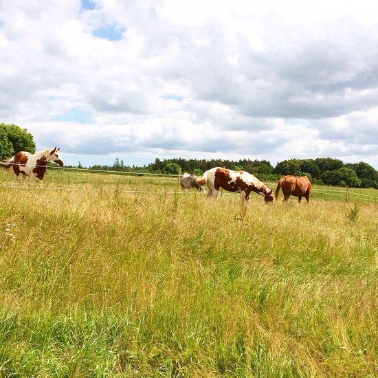 I Love Horses My Horse Horses Horse