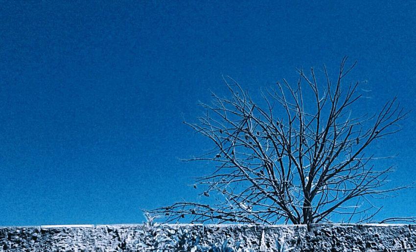 ÁArvore♥