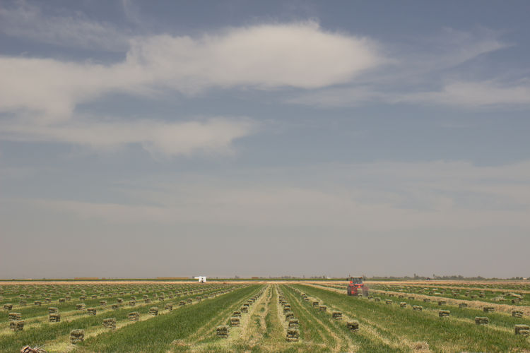 Scenic View Of Agricultural Land Against Sky