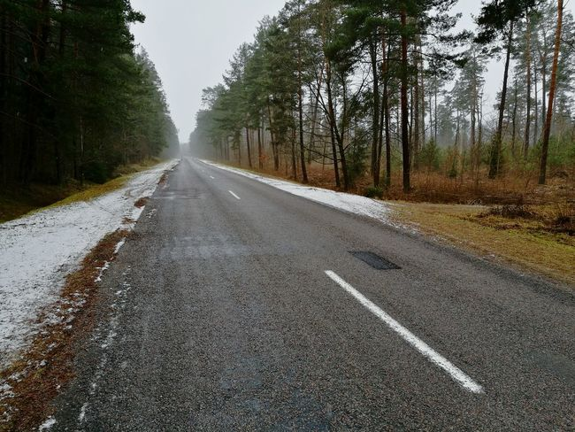 The last winter for some trees (marked with red line). Asphalt White Line Road Lines Winter Road Winter Trees Foggy Weather Forest Road Forest Trees The Way Forward Road Tree Asphalt Outdoors Day Transportation No People Nature