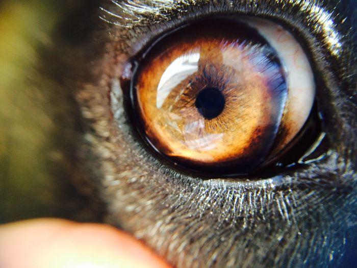 Cropped Portrait Of Dog Eye