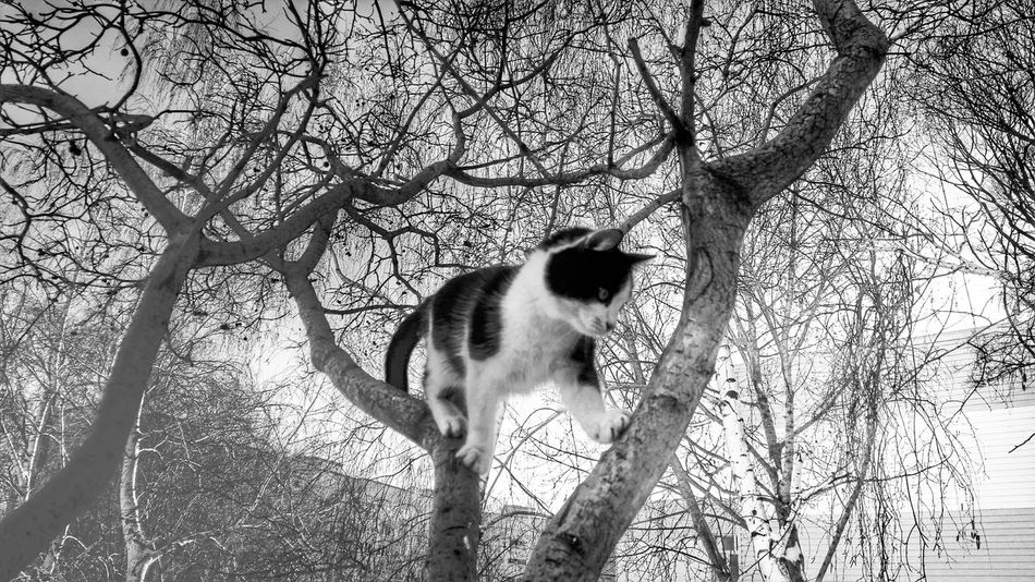 Walking on air. Cat Cat Lovers Catoftheday Cat Watching Cat Walking Cat♡ B&w B&w Photography B&w Street Photography FUNNY ANIMALS
