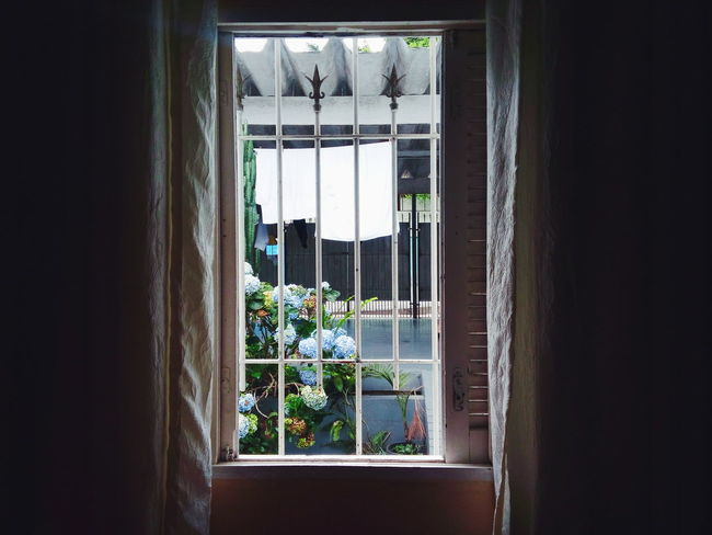 Window Indoors  Day Plant No People Domestic Room Brazil Outdoors