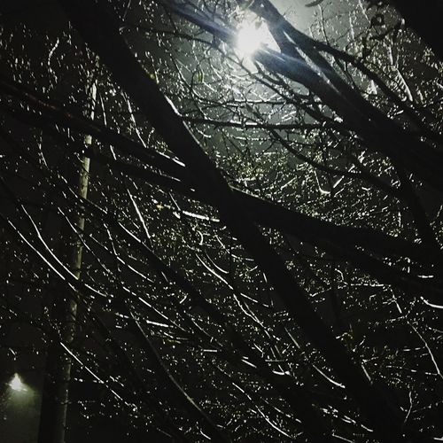 Low angle view of tree at night