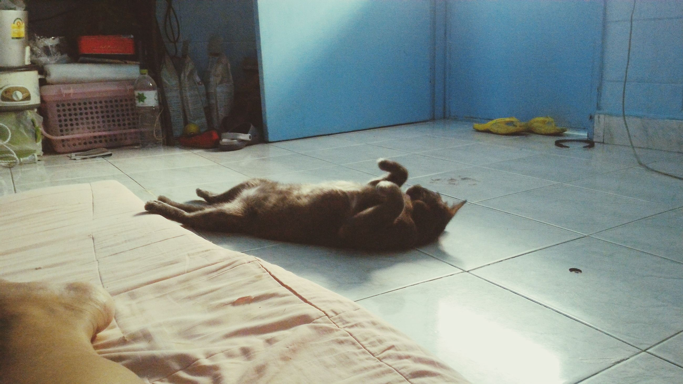 domestic animals, pets, domestic cat, animal themes, mammal, one animal, cat, feline, relaxation, indoors, full length, lying down, resting, sitting, high angle view, sleeping, dog, home interior, two animals, sunlight