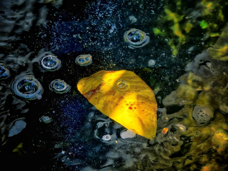 Like in outer space Space Ship Earth Close-up Water Full Frame Backgrounds Autumn Bokeh Lights Leafs Colors Beauty In Nature Dreamlike EyeEm Nature Lover Leaf Pattern Artistic Expression Tranquil Scene My Unique Style EyeEm Best Shots Exceptional Photography EyeEm Gallery Leaf 🍂 Yellow Leaf Photography Bubbles... Bubbles...Bubbles.... Abstract Expressionism Wilderness Detail Getting Inspired