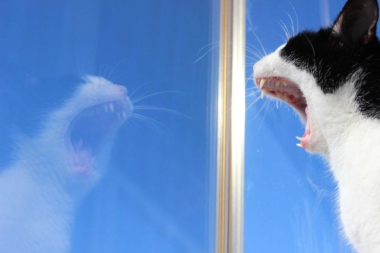 Capture The Moment Cat Creative Creative Light And Shadow EyeEm Best Shots EyeEmAnimalLover Shadow Sneezing Cat