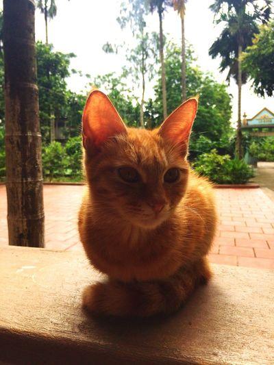 Thằng Vàng Cat , Home