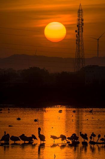 Silhouette birds in water against orange sky