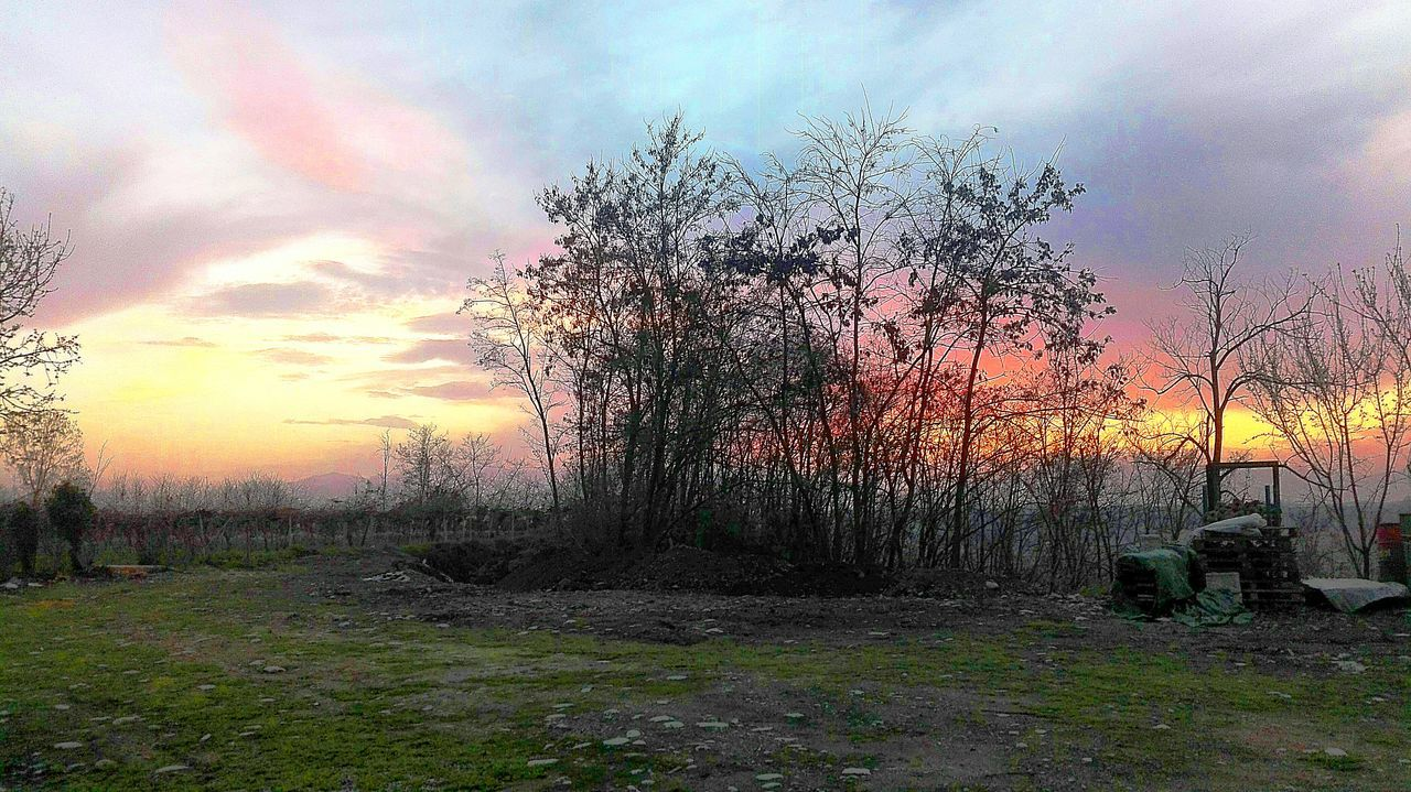sunset, tranquility, nature, sky, tree, beauty in nature, cloud - sky, tranquil scene, landscape, scenics, no people, outdoors, bare tree, grass, growth, day