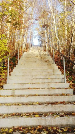 Tree The Way Forward Steps And Staircases Autumn Growth Day Outdoors No People Nature Scenics Beauty In Nature