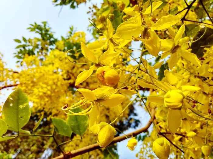 Flowers Bunch Of Flowers Yellow World Yellow Flowers Hanging Around
