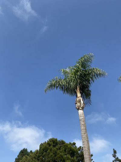 Nice view Sky