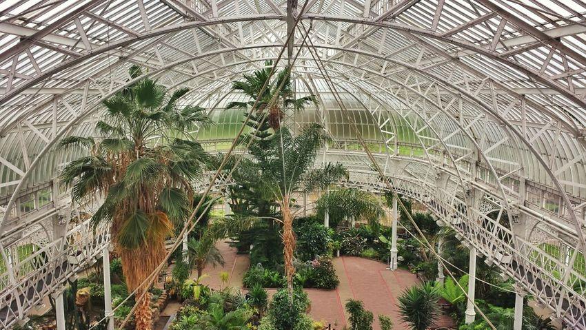 Shoot, Share, Learn - EyeEm Glasgow Meetup Looking For Symmetry Winter Garden