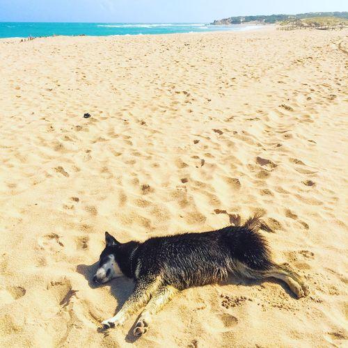 Sand Land Beach Nature Animal Animal Themes Dog