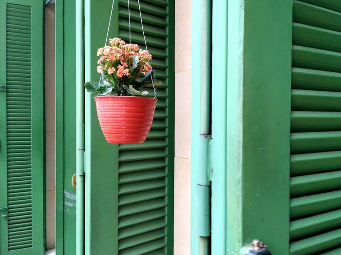 Window Box Flower Corrugated Iron Multi Colored Window Leaf Planting Shutter Potted Plant Plant Part Flowering Plant Plant Nursery Flower Pot Window Sill Gardening In Bloom Botany Botanical Garden Houseplant EyeEmNewHere