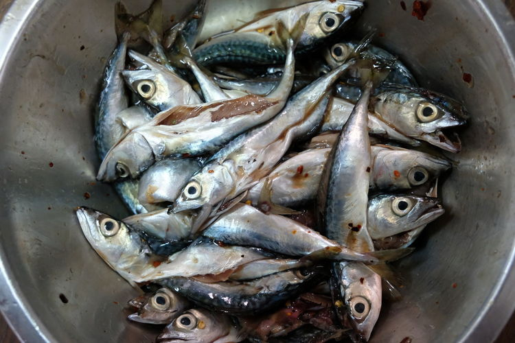 Directly above shot of fish for sale in container
